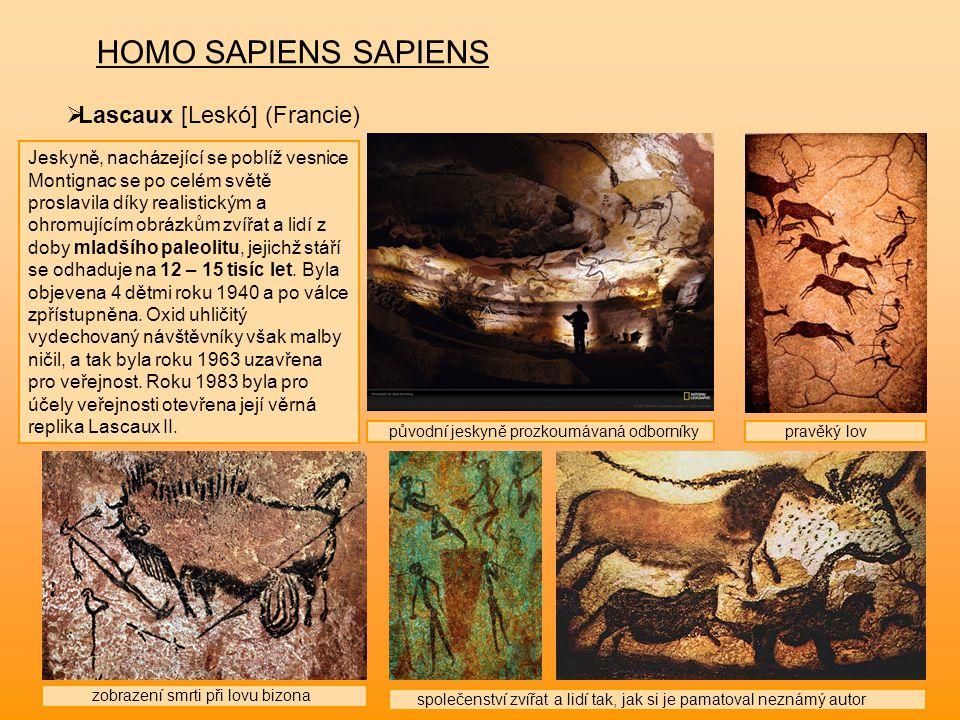 HOMO SAPIENS SAPIENS Lascaux [Leskó] (Francie)